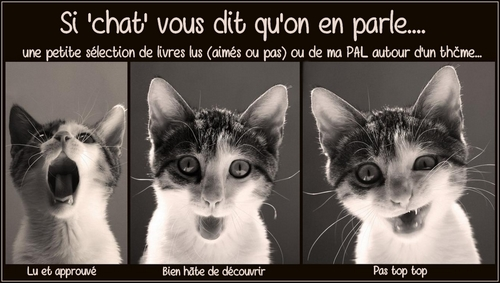 si chat vous dit grand